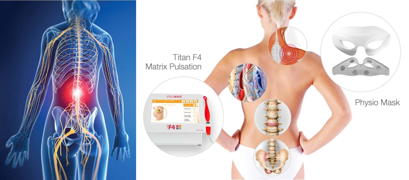 Ziemlich Menschliche Anatomie Und Physiologie Bewertung ...